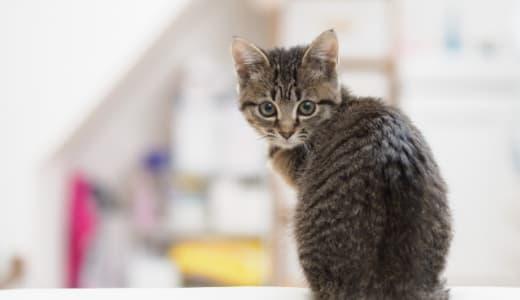 原因は何?産後猫背になった話。